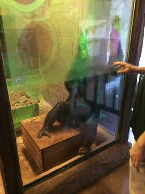 zoo_training_highres